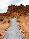 Rural Trail Through Desert Photographic Print by Beathan 
