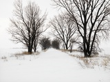 Trees and Drifted Road Photographic Print by Ron Chapple