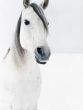White Horse in Snow Photographie par Birgid Allig