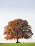 Oak Tree in Meadow Photographic Print by Frank Lukasseck