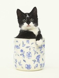 Black and White Kitten Sitting in Ceramic Jar Photographic Print by Pat Doyle