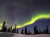 Aurora Borealis above Forest Fotografie-Druck von Frank Lukasseck