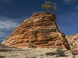 Pinyon Pine atop Sandstone Hoodoo Photographic Print by James Randklev