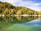 Larch Trees on Lake Seebensee Photographic Print by Frank Lukasseck