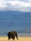 Elephant on Savanna in Ngorongoro Crater Photographic Print by Remi Benali