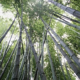 Bamboo Forest Photographic Print by Micha Pawlitzki