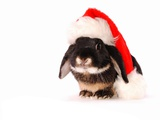Rabbit in a Santa Hat Photographic Print by Martin Gallagher
