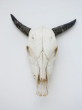 Close-up of a cow skull mounted on the wall Photographic Print by Fabrice Lerouge