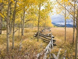 Wooden fence and Aspen forest in autumn Photographic Print by Frank Lukasseck