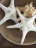 Starfish in a basket Photographic Print by Felix Wirth