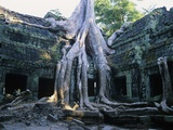 Tree Growing Through Ta Prohm Temple Photographic Print