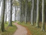 Beech Forest on the Baltic Coast Photographic Print by Frank Lukasseck