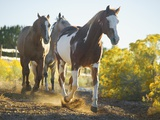 Horses on Path Photographic Print