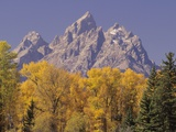 Autumn Color in Grand Teton National Park Photographic Print by Daniel Cox