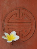 Long Life Symbol and Lotus Flower Photographic Print by Sebastien Desarmaux