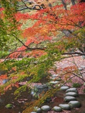 Steppingstones beneath Japanese maple Photographic Print