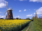 Oilseed Field and Windmill Photographic Print by Quentin Bargate