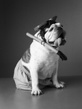 Bulldog Wearing Diving Mask, Snorkel and Swim Trunks Photographic Print