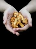 Handful of Mushrooms Fotografisk tryk af Elisa Lazo De Valdez