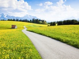 Road through dandelion fields Photographic Print by Frank Lukasseck