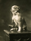Chihuahua Smoking a Pipe Photographic Print