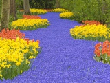 Flowers at Keukenhof Garden Photographic Print by Jim Zuckerman