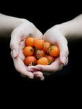 Handful of Tomatoes Fotografisk tryk af Elisa Lazo De Valdez
