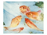 Illustration of Koi by Edward Julius Detmold Giclee Print