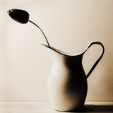 Dark Tulip in Old Enamel Water Pitcher Photographic Print by Tom Marks