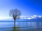 Tree in Erhai Lake, Yunnan, China Photographic Print