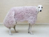 Greyhound Wearing a Pink Rug Fotografie-Druck von Estelle Klawitter