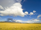 Cumulus Clouds Over Golden Pampas in Chile Lámina fotográfica por John Eastcott & Yva Momatiuk