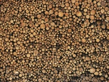 Pulp Wood Stacked in Processing Yard, British Columbia, Canada. Photographic Print by Chris Cheadle