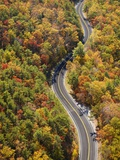 Road through Autumn forest Lmina fotogrfica por Cameron Davidson