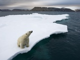 Polar Bear on Melting Iceberg in the Svalbard Islands Photographic Print by Paul Souders