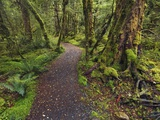 Lake Gunn Nature Walk trail in Fiordland National Park Photographic Print by Frank Krahmer