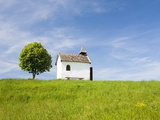 Lime tree and tiny white chapel in rural meadow Photographic Print by Frank Lukasseck