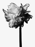 Flower Photographic Print by Brian David Stevens