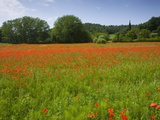Poppy field, Chiusi, Italy Photographic Print by Roland Gerth