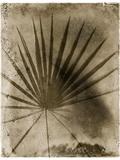 Palmetto Reproduction photographique par John Kuss