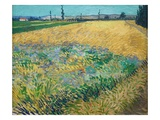 Wheatfield Giclee Print by Vincent van Gogh