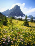 Wildflowers Growing in Mountain Meadow Photographie par Christopher Talbot Frank