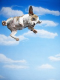 Flying Bulldog Puppy Photographic Print by Lew Robertson