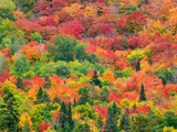 Forest on hill with autumn colors Photographic Print by Mike Grandmaison