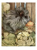 Illustration of Guinea Pig by Edward Julius Detmold Giclee Print