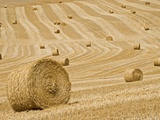 Italy, Tuscany, Harvested corn field, bales of straw Photographie par Fotofeeling 