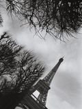 Eiffel Tower and Surrounding Tree Branches Photographic Print by Manuela Höfer