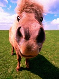 Pony's Nose Photographic Print by Pat Doyle