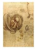 Study of fetus by Leonardo da Vinci Lámina giclée