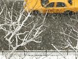 Yellow cab on Park Avenue in a snowstorm Photographie par Bo Zaunders